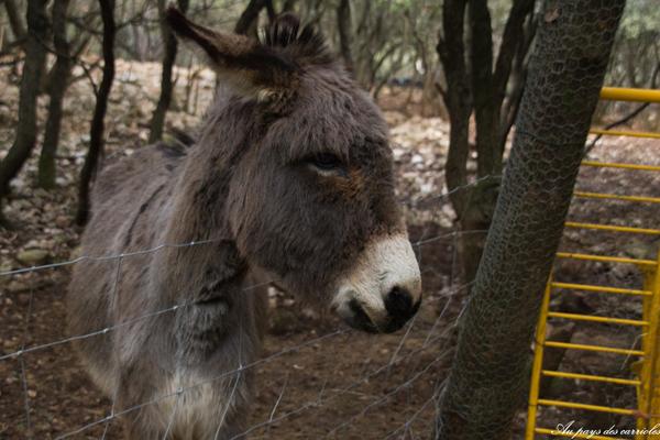 animaux parc de loisirs enfant au pays des carrioles