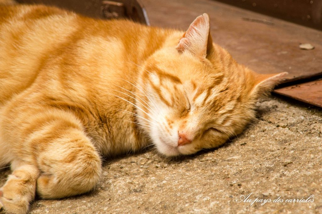 chat sieste calme au pays des carrioles la boissiere