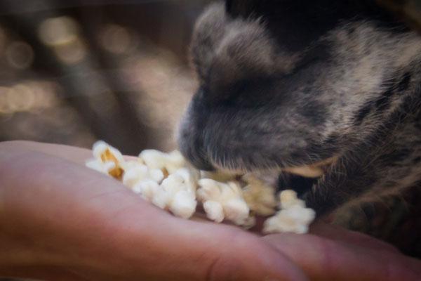 chevres parc insolite parc animalier au pays des carrioles Montpellier