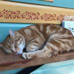 chat Johnny fait sa sieste zenitude calme et repos
