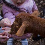 Roro et les enfants donner a manger dans la main emerveillement contact avec les animaux