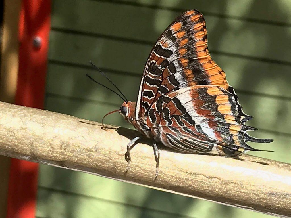 insectes papillons printemps couleurs exceptionnelles lumieres au pays des carrioles la Boissiere